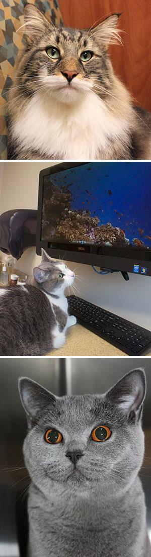CVVH-Cat Friendly Practice