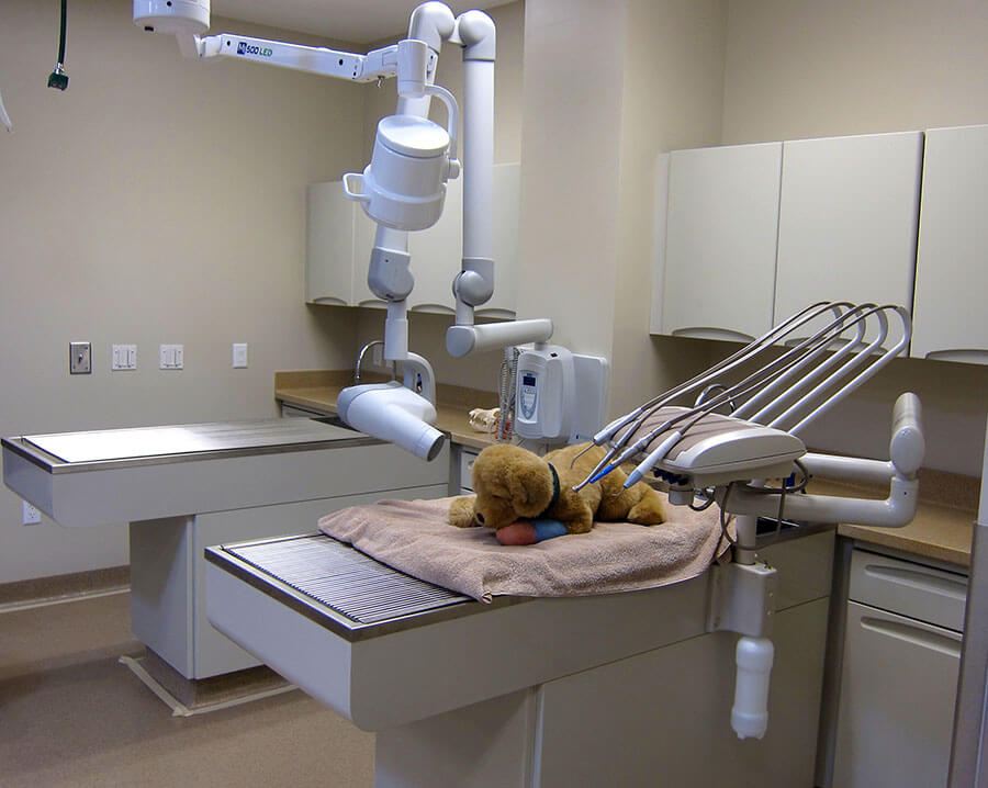 CVVH: Veterinary Dental Care