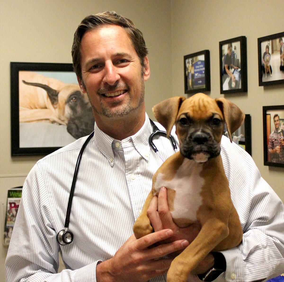 todd hughes dvm conejo valley veterinary hospital
