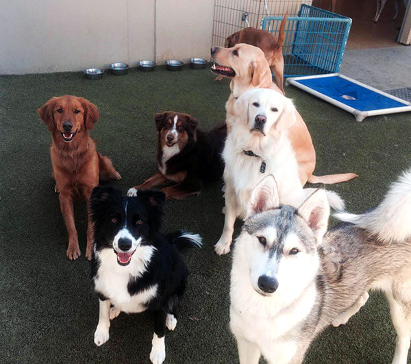 Doggy Day Camp 03