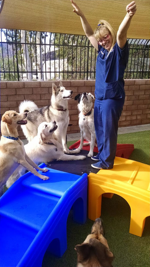 Doggy Day Camp 04