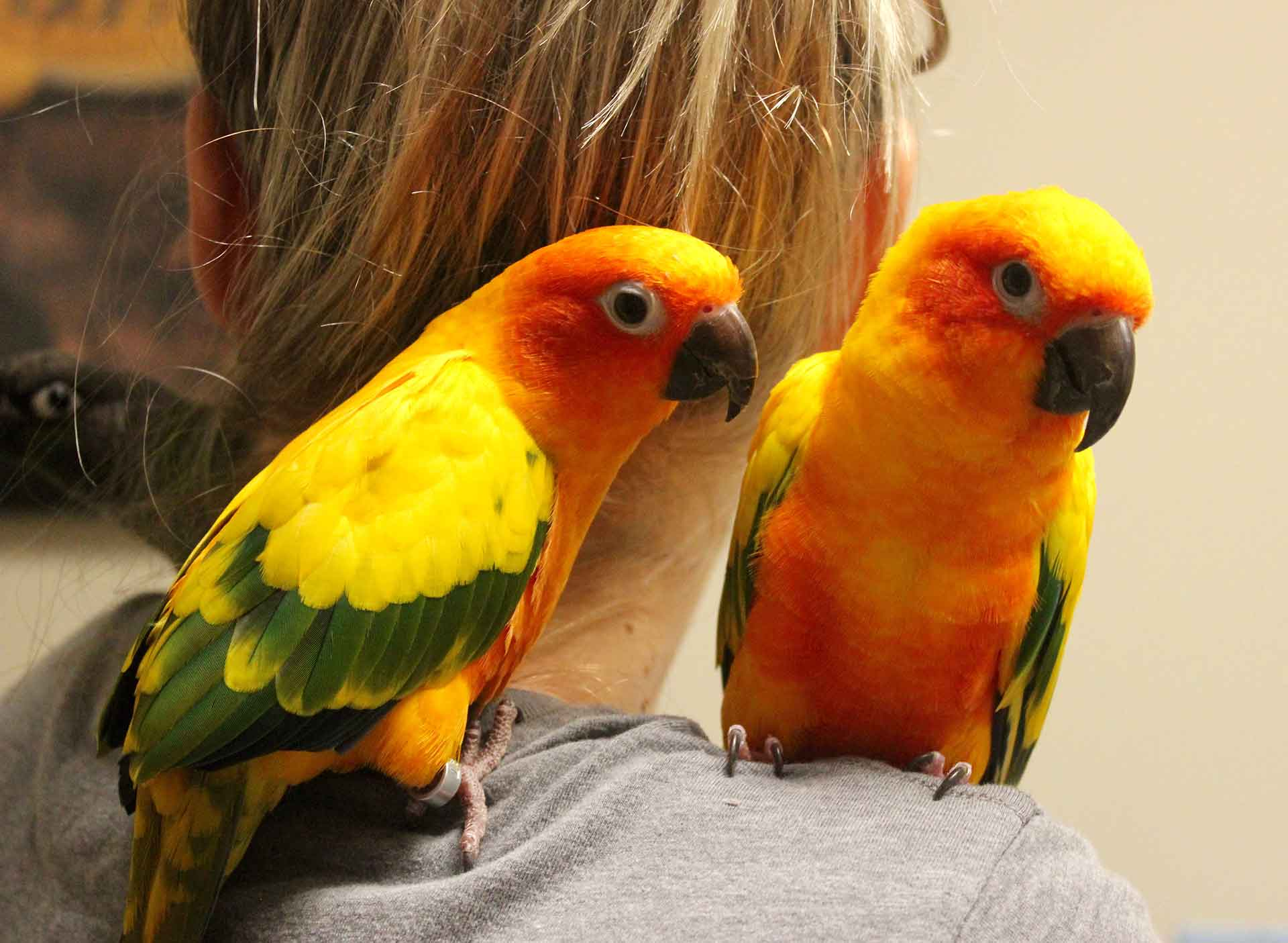 Avian and Exotic Pet Care