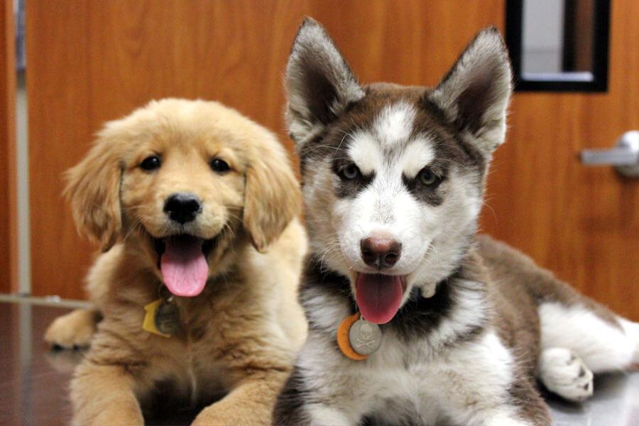 Vet Appreciation: Pets