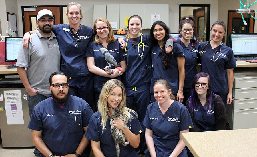 ConejoVet Veterinary Technicians