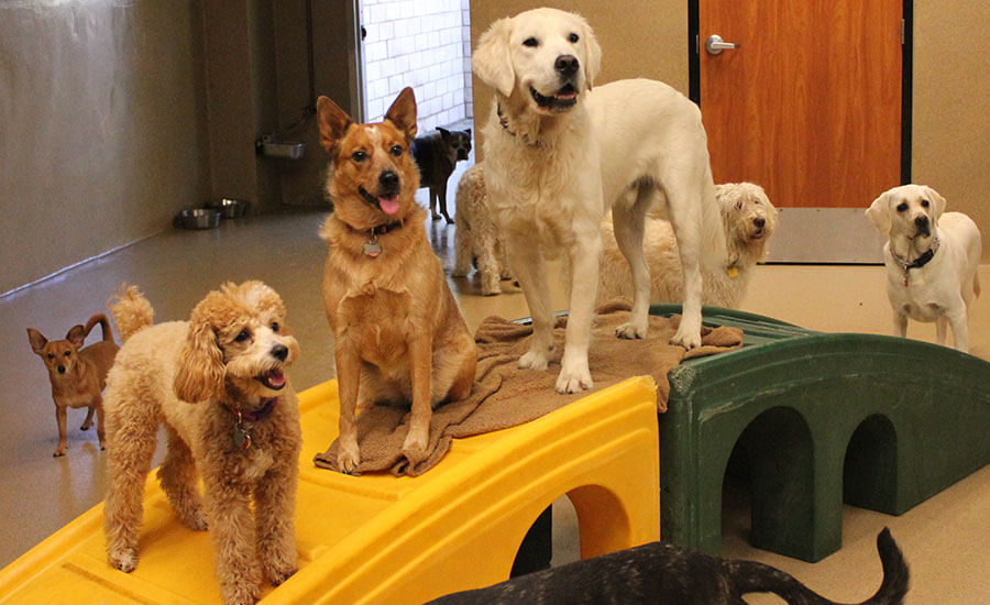 Benefits of Doggy Day Care