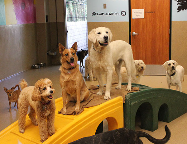 Doggy Day Camp