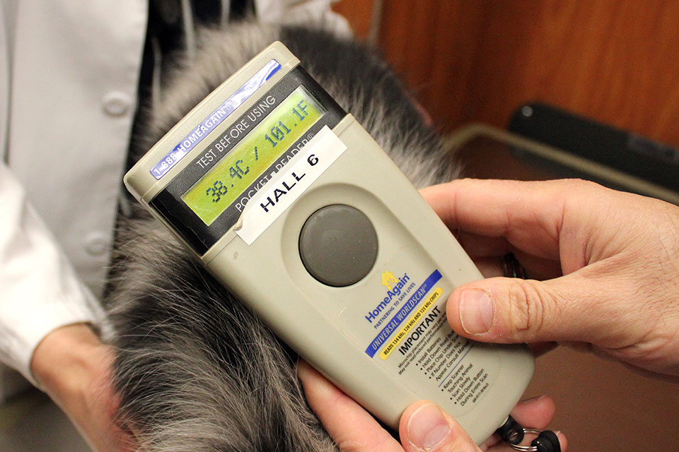 Importance of Microchipping your Pets-001